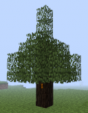 Rubber Tree.png